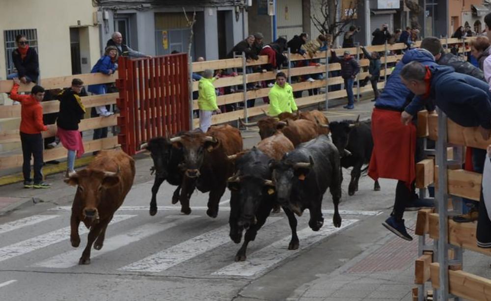 Encierro con toros en Calahorra